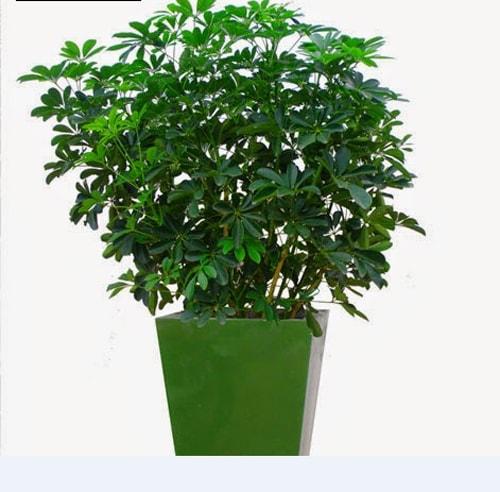 Bố trí cây xanh trong thiết kế nội thất hội trường