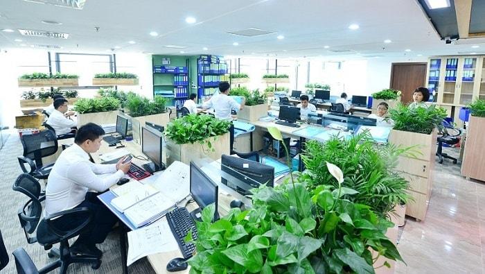 Cách đơn giản nhất là bày cây xanh trong phòng làm việc, tiền sảnh