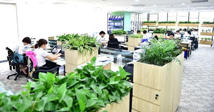 Tạo không gian độc đáo cho văn phòng bằng những mảng xanh của cây