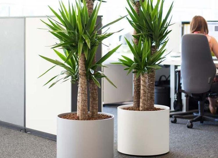 Chậu cây để bàn giúp thanh lọc không khí và sảng khoái tinh thần