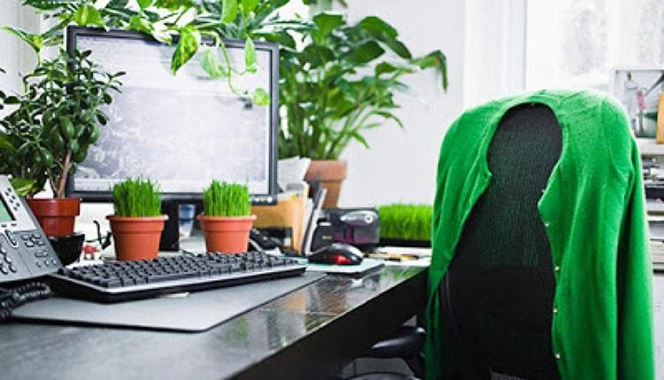 Cây xanh giúp mang lại nguồn năng lượng tốt cho văn phòng