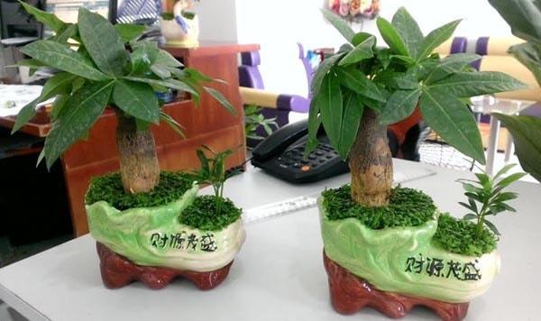 Nên bày những chậu cây xanh lên bàn giám đốc