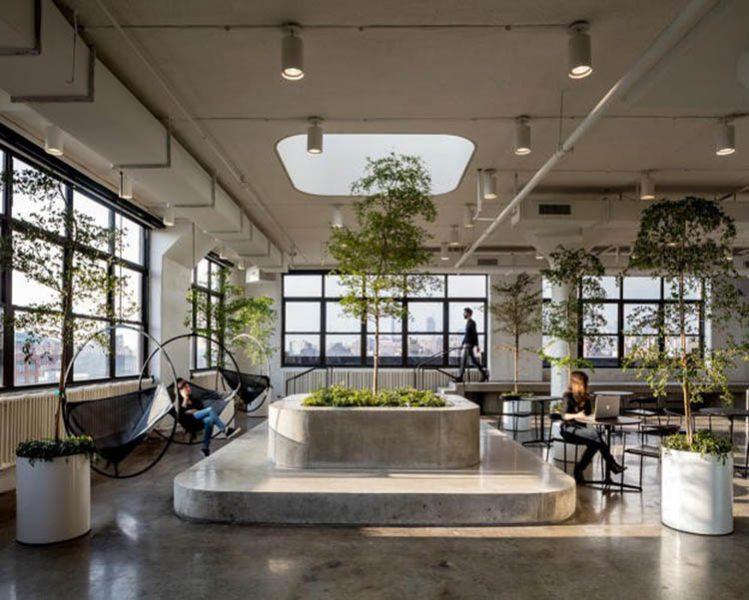 Thiết kế văn phòng phong cách Eco với không gian làm việc xanh