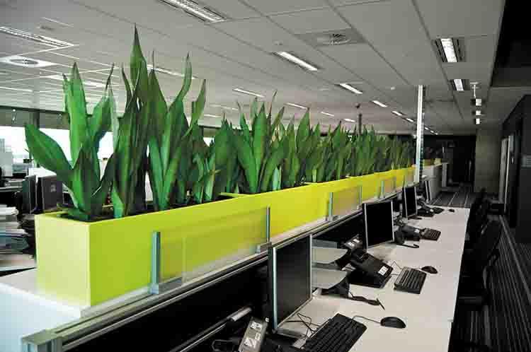 Cây xanh giúp mang lại vẻ thẩm mỹ cho văn phòng